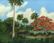 royal poinciana on the river