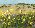 Seligman North Western Arizona Desert Landscape