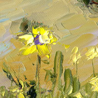 wildflowers in the southwestern desert