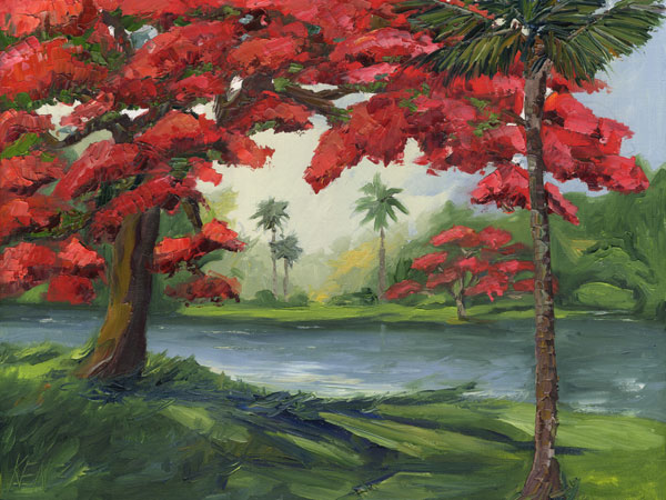 royal poinciana trees